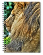 Woolly Mane Of The King   Spiral Notebook