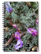 Woolly-pod Locoweed Closeup Spiral Notebook
