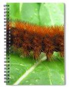 Wooly Bear  Spiral Notebook