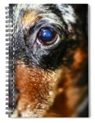 Worried Wiener Spiral Notebook
