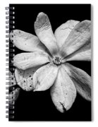 Wounded White Magnolia Wide Version Black And White Spiral Notebook