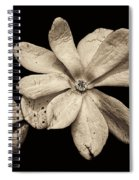 Wounded White Magnolia Wide Version Sepia Spiral Notebook