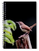 Wren - Carolina Wren - Bird Spiral Notebook