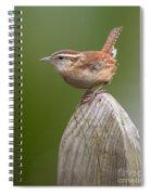 Wren Chirping Spiral Notebook