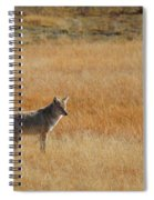 Wylie Coyote Spiral Notebook