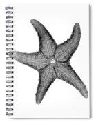 X-ray Of Starfish Spiral Notebook