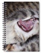 Yawning Kitten Spiral Notebook