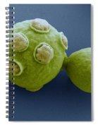 Yeast Cells Sem Spiral Notebook