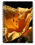 Yellow And Cream Day Lily Spiral Notebook