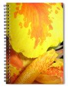 Yellow And Orange Petals Illuminated Spiral Notebook