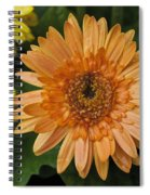Yellow And Peach Daisy Spiral Notebook