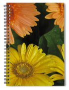 Yellow And Peach Spiral Notebook