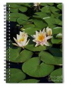 Yellow  And Pink Lily  Spiral Notebook