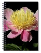 Yellow And Pink Peony Spiral Notebook