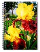 Yellow And Purple Iris Spiral Notebook