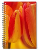 Yellow And Red Striped Tulips Spiral Notebook