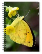 Yellow And Yellow Sulphur Butterfly Spiral Notebook