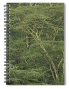 Yellow-barked Acacia Trees Spiral Notebook