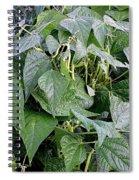 Yellow Beans Spiral Notebook