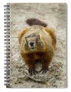 Yellow-bellied Marmot   #5300 Spiral Notebook