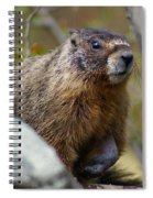 Yellow-bellied Marmot Spiral Notebook