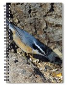 Yellow Bellied Nuthatch Spiral Notebook