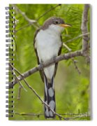 Yellow-billed Cuckoo Spiral Notebook