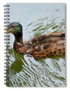 Yellow Billed Duck Spiral Notebook