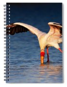 Yellow-billed Stork Hunting For Food Spiral Notebook
