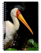 Yellow Billed Stork Peers At Camera Spiral Notebook