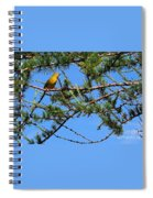 Yellow Bird In A Juniper Tree Spiral Notebook