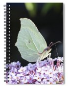 Yellow Brimstone Spiral Notebook
