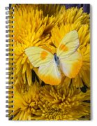 Yellow Butterfly On Yellow Mums Spiral Notebook