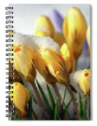 Yellow Crocuses In The Snow Spiral Notebook