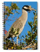 Yellow Crown Night Heron Spiral Notebook