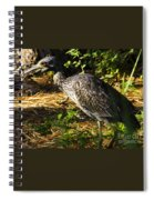 Yellow-crowned Night Heron Eating A Fiddler Crab Dinner Spiral Notebook