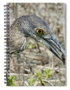 Yellow-crowned Night Heron With Crab Spiral Notebook