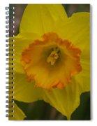 Yellow Daffies Spiral Notebook
