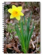 Yellow Daffodil At Lee Gardens Spiral Notebook