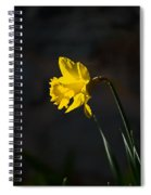 Yellow Daffodil Spiral Notebook