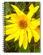 Yellow Daisies Spiral Notebook