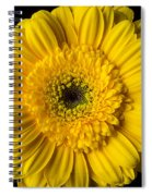 Yellow Daisy Close Up Spiral Notebook