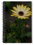 Yellow Daisy Spiral Notebook
