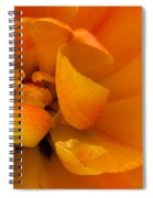 Yellow Double Tulip Spiral Notebook