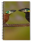 Yellow-eared Toucanet Pair Spiral Notebook