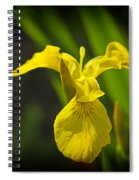 Yellow Flag Flower Outdoors Spiral Notebook