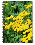 Yellow Flowers 3 Spiral Notebook