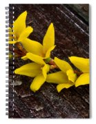 Yellow Forsythia Spiral Notebook