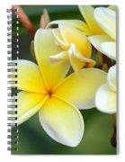 Yellow Frangipani Flowers Spiral Notebook