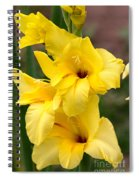 Yellow Gladiolus Spiral Notebook